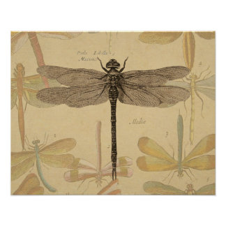 Vintage dragonfly drawing posters