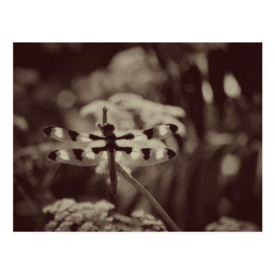 Vintage Dragonfly Postcard