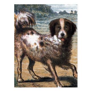 Vintage Drawing: A Stray Dog Postcard