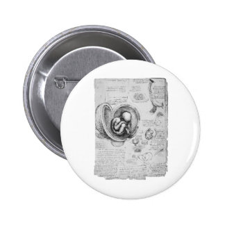 Vintage drawing of a fetus in the uterus 1 pinback button
