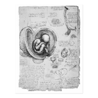 Vintage drawing of a fetus in the uterus 1 postcard