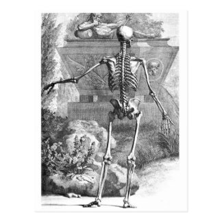 Vintage drawing of a rear facing skeleton postcard