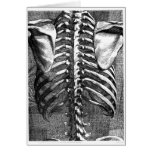 Vintage drawing of a spine and ribcage greeting card