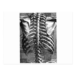 Vintage drawing of a spine and ribcage postcard