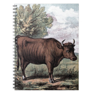 Vintage Drawing: Red Heifer Notebook