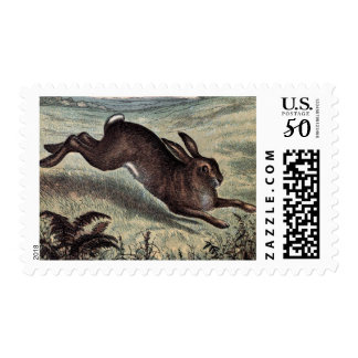 Vintage Drawing: Running Hare in a Field Postage
