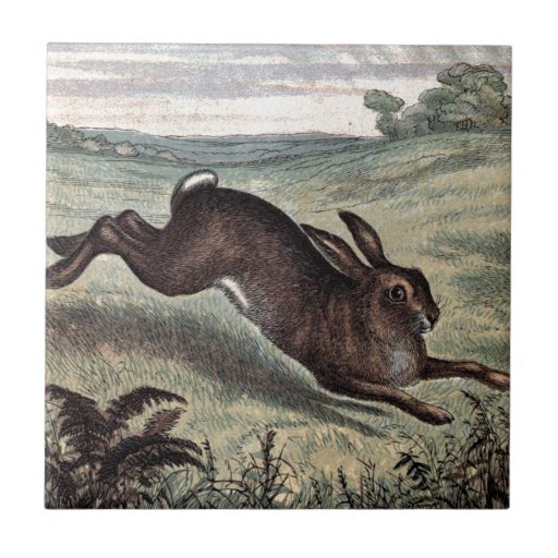 Hare running drawing - photo#3