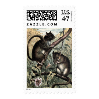 Vintage Drawing: The Dormouse Postage