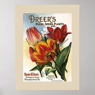 Vintage Dreer's Tulip Bulbs Poster