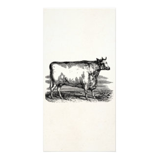 Vintage Durham Cow Bull Personalized Illustration Card
