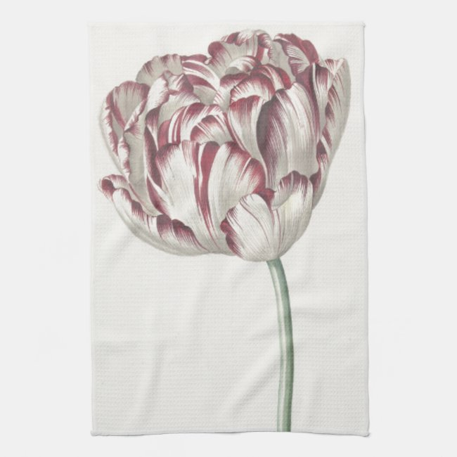 Vintage Dutch Art: White and Red Tulip