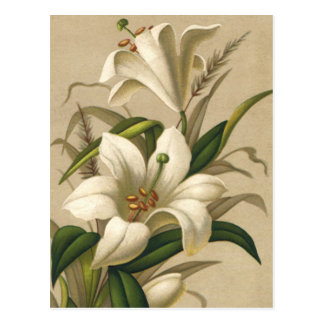Vintage Easter Lilies, Victorian Flowers in Bloom Postcard