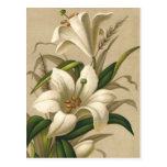 Vintage Easter, Victorian Lily Flowers in Bloom Postcards