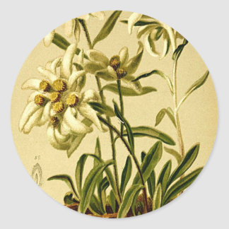 Vintage Edelweiss Classic Round Sticker