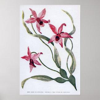 Vintage Edwardian Orchid Poster