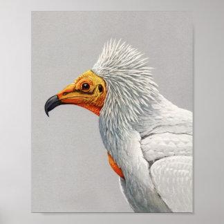 Vintage Egyptian Vulture Poster Print