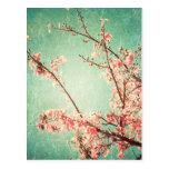 Vintage elegant worn teal wood & cherry blossom postcards