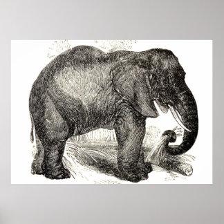 Vintage Elephant Illustration (1891) Poster