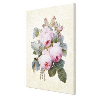 Vintage English Bourbon Rose Bouquet by Redoute Canvas Print