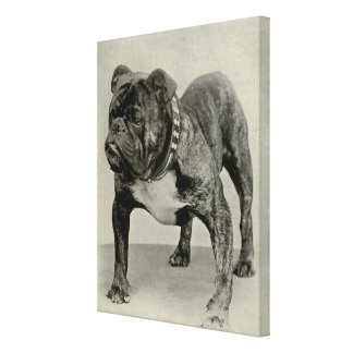 Vintage English Bulldog Canvas Print