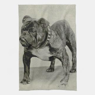 Vintage English Bulldog Photograph Kitchen Towel