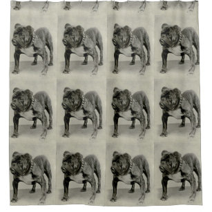 Vintage English Bulldog Photograph Shower Curtain