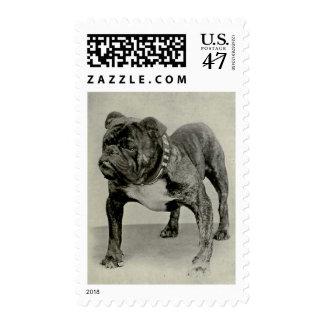 Vintage English Bulldog Photograph Stamp