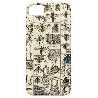 Vintage Entomology iPhone 5 Cases