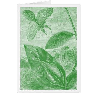 Vintage Entomology Green Katydid Flying Leaf Card