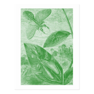 Vintage Entomology Green Katydid Flying Leaf Postcard