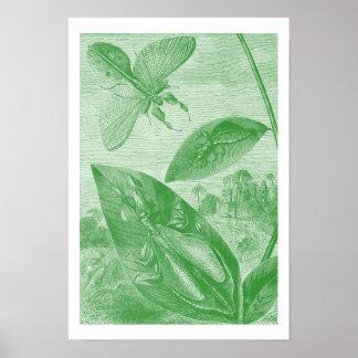 Vintage Entomology Green Katydid Flying Leaf Poster