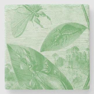 Vintage Entomology Green Katydid Flying Leaf Stone Coaster