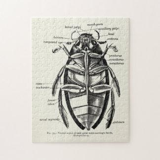 Vintage Entomology Hydrophilidae Scavenger Beetle Jigsaw Puzzle