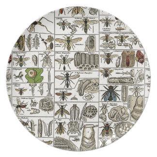 Vintage Entomology Melamine Plate