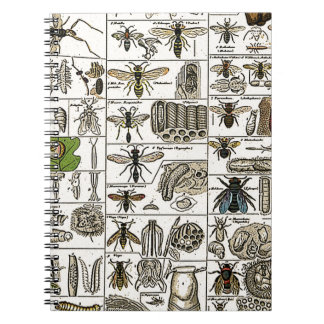 Vintage Entomology Notebook
