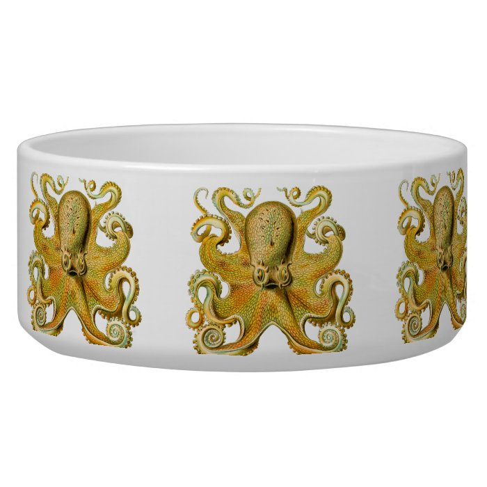 Vintage Ernst Haeckel Octopus in Yellow Bowl
