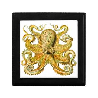 Vintage Ernst Haeckel Octopus in Yellow Jewelry Box