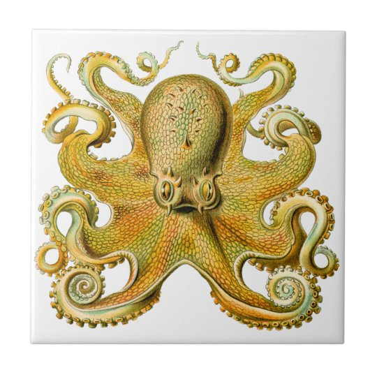 Vintage Ernst Haeckel Octopus in Yellow Tile