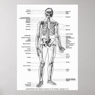 Vintage - esqueleto etiquetado póster