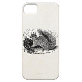 Vintage European Squirrel 1800s Squirrels iPhone SE/5/5s Case