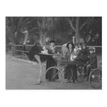 Vintage Family in Ostrich Drawn Carriage Postcard