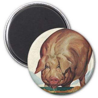 Vintage Farm Animals, Pig Eating Slop at a Trough 2 Inch Round Magnet