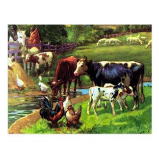 Vintage Farm Postcard