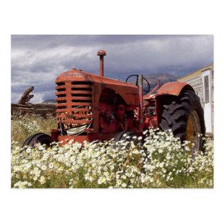 Vintage Farm Tractor in Field Photo Postcard