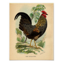 Vintage Farming Victorian Print Rooster