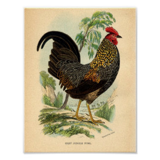 Vintage Farming Victorian Print Rooster Poster