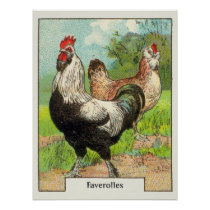 Vintage Faverolles Chicken Poster