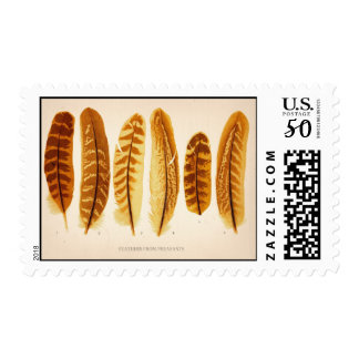 Vintage Feathers From Pheasants Postage