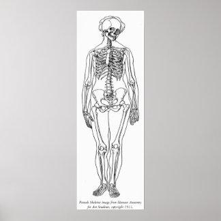 Vintage - Female Skeleton Image Poster