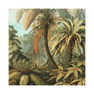 Vintage Ferns and Palm Tree Botanical Stretched Canvas Print